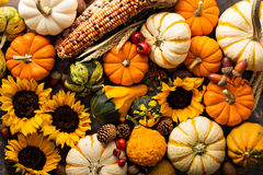 Fall background with pumpkins. Fall background with pumpkin and sunflowers overhead shot Stock Image