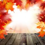 Fall Background with Red Autumn Maple Leaves Royalty Free Stock Photos