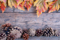 Fall Background. Wooden Fall Backgound with Colorful Leaves and Fir Cones as Frame Stock Image