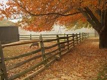 Fall Barnyard. This is a Fall shot of some sheep in the barnyard Stock Photo