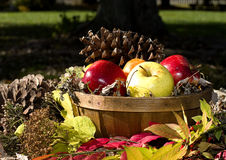 Fall Basket of Apples Stock Photos