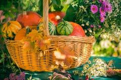 Fall basket autumn harvest garden pumpkin fruits colorful flower royalty free stock photos