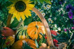 Fall basket autumn harvest garden pumpkin fruits colorful flower Royalty Free Stock Photos