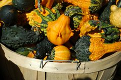 Fall Basket of Gourds Royalty Free Stock Photography