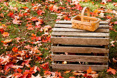Fall Basket in the Leaves Stock Photography