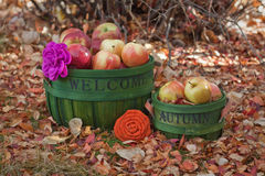 Fall Baskets Filled with Apples. Two green baskets in the leaves filled with apples Royalty Free Stock Image