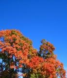 Fall-Baum Stockbild
