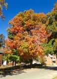 Fall-Baum-Landschaft Stockbilder