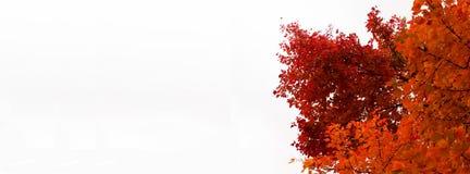 Fall-Baumtitel - intensiv farbige Orangen- und Rotblätter stockbild