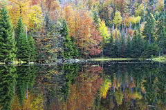 Fall in Bavarian Forest. Photo of Fall in Bavarian Forest royalty free stock photography