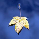 Fall in Bavarian Forest. Photo of Fall in Bavarian Forest royalty free stock images