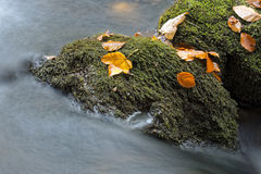 Fall in Bavarian Forest. Photo of Fall in Bavarian Forest stock photography