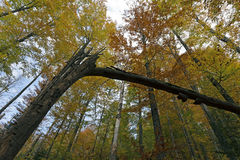 Fall in Bavarian Forest. Photo of Fall in Bavarian Forest stock images