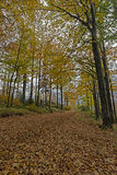 Fall in Bavarian Forest. Photo of Fall in Bavarian Forest royalty free stock photos