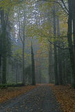 Fall in Bavarian Forest. Photo of Fall in Bavarian Forest Stock Image