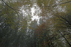 Fall in Bavarian Forest. Photo of fall in the bavarian forest Stock Photo