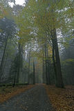 Fall in Bavarian Forest. Picture of fall in the bavarian forest royalty free stock photography