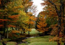 Fall Beauty. This picture was taken in Connecticut during the Fall season Royalty Free Stock Photo