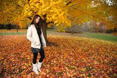Fall beauty Stock Photography