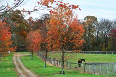 Autumn landscape on horse farm. Fall beauty at its peak on a Thoroughbred horse farm: brilliant foliage, still verdant pasture with its graceful occupants Stock Image