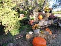 Fall beauty Stock Image