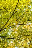 Autumn nature scene background, leaves and trees outdoors. Fall beauty, weather and seasons concept - Autumn nature scene background, leaves and trees outdoors stock photos