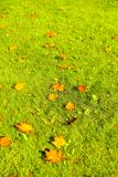 Autumn nature scene background, leaves and trees outdoors. Fall beauty, weather and seasons concept - Autumn nature scene background, leaves and trees outdoors royalty free stock images