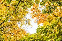 Autumn nature scene background, leaves and trees outdoors. Fall beauty, weather and seasons concept - Autumn nature scene background, leaves and trees outdoors royalty free stock photos