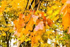 Autumn nature scene background, leaves and trees outdoors. Fall beauty, weather and seasons concept - Autumn nature scene background, leaves and trees outdoors stock photography