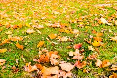 Autumn nature scene background, leaves and trees outdoors. Fall beauty, weather and seasons concept - Autumn nature scene background, leaves and trees outdoors stock image