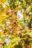 Autumn nature scene background, leaves and trees outdoors. Fall beauty, weather and seasons concept - Autumn nature scene background, leaves and trees outdoors stock photo
