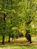 Fall beginning background Royalty Free Stock Photography