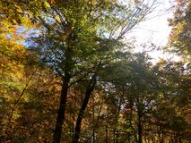 Fall beginning royalty free stock images