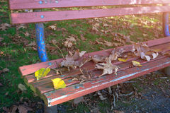 Fall bench in the park Royalty Free Stock Photos