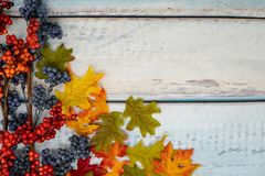 Fall berry and maple leaves foilage autumn arrangement on a blue. Concept useful for fall, autumn and Thanksgiving backgrounds. Pretty blue wooden background royalty free stock image
