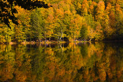 Fall at The Big Lake At The Yedigoller National Park Stock Photos