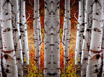 Fall Birch Leaves Stock Photography