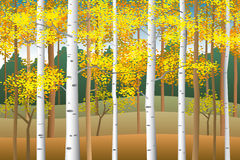 Fall birches. Fall in the birch forest vector illustration