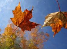 Fall-Blätter Lizenzfreies Stockbild