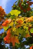 Fall-Blätter Stockfotos