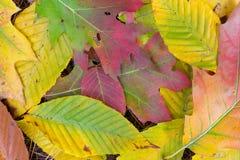 Fall-Blätter Stockbild