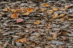 Fall-Blätter Stockfotografie