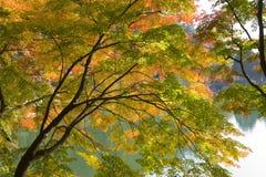 Fall-Blätter Lizenzfreies Stockfoto