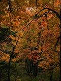 Fall-Blätter auf Baum im Wald lizenzfreie stockfotos