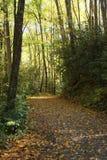 Fall-Blätter auf einem Gebirgsweg Stockbild
