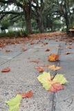 Fall-Blätter auf einem Weg unter spanischem Moos in der Savanne, GA lizenzfreies stockbild