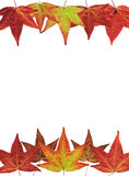 Fall-Blätter auf Weiß Lizenzfreie Stockbilder