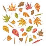Fall-Blätter für Ihr dekoratives Design Stockfotos