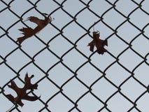 Fall-Blätter gefangen auf Zaun Lizenzfreie Stockbilder