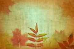 Fall-Blätter mit abstrakter Beschaffenheit Stockfotografie